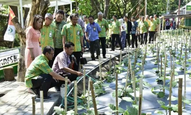 Petrokimia Manfaatkan Air Wudhu Masjid untuk Budi Daya Sayur dan Ikan