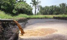 Penuhi Kebutuhan Bahan Bakar Biomasa, Jepang Tertarik Impor Limbah Sawit Indonesia