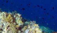 Mangatasik, Destinasi Wisata Bawah Laut Menawan di Sulut selain Bunaken