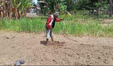 Kisah Pria Difabel, 16 Tahun Menggarap Kebun Sayur dengan Satu Tangan
